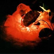 2001年小原流挿花いけばな写真コンテスト入賞写真 『再生』の画像
